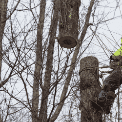 Arborist practicing crane safety by using a choker and sling