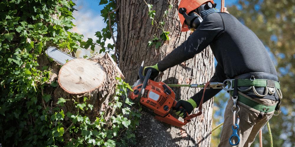 Arborist cutting tree for tree service company