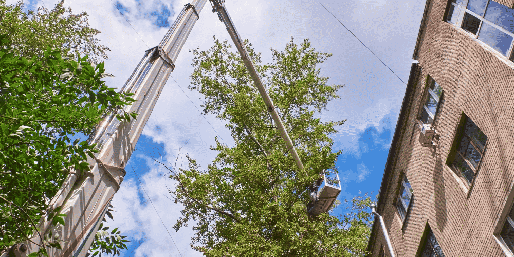 Arborist in crane needs tree service insurance for risky work