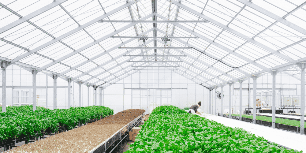 Fire resistant greenhouse structures help thwart damage from wildfires