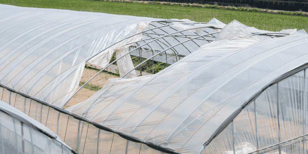 Wind damage to greenhouse structure