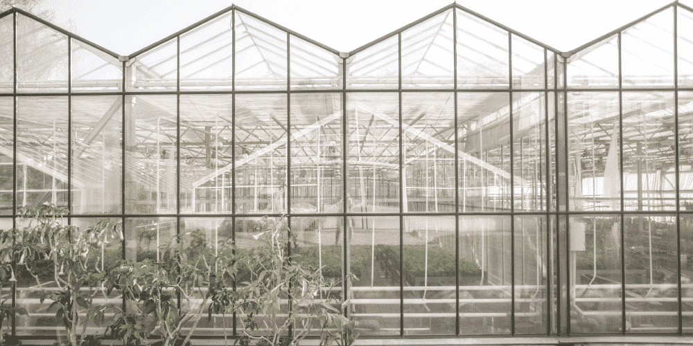 Glass greenhouse coverings are prone to damage from the elements