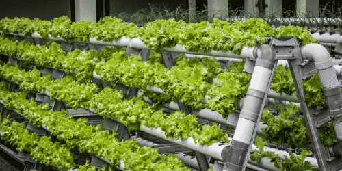 Vertical farm systems are becoming increasingly more popular throughout the growing industry