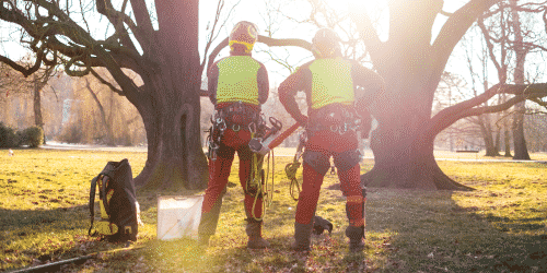Labor shortages in the tree care industry have led to a number of position gaps in tree care businesses nationwide
