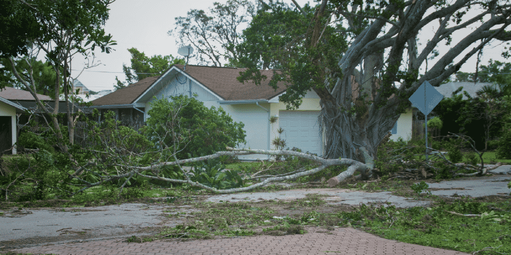 Tree service businesses are essential to providing post-storm recovery