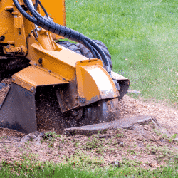 Stump removal should be a necessary service for your tree care business