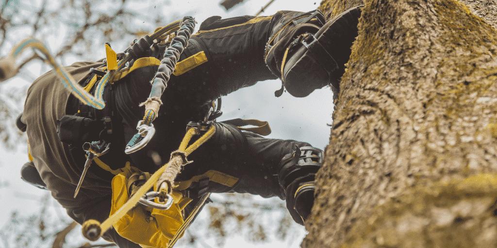 Tree service worker climbing in tree