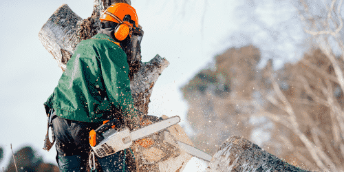 Workers' compensation insurance is required for tree care workers