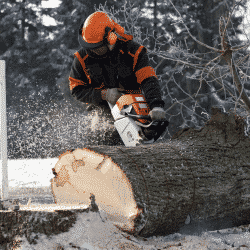Tree professional cutting tree in cold climate