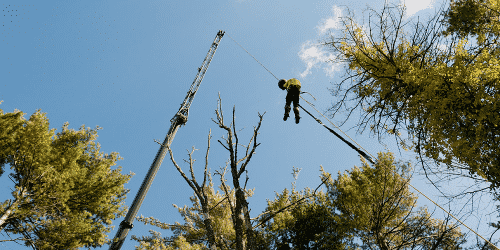 Arborist & tree care professional performing crane safety work