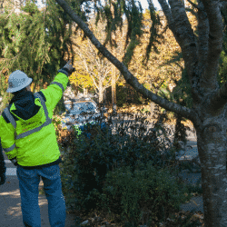 tree-care professionals risk safety assessment