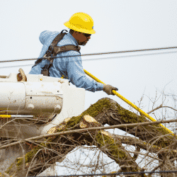 Tree-trimming arborist utility line clearing