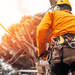 Starting up a tree service business could be difficult. Read more about getting your company off the ground
