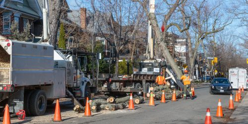 Tree care crew in urban setting