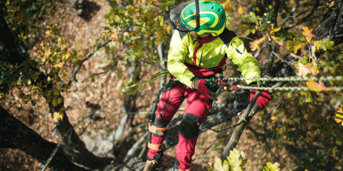 Workers' Compensation insurance claims account for a high number of tree care losses