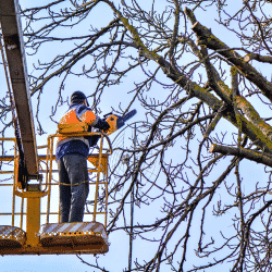 Tree arborist complying with crane safety regulations