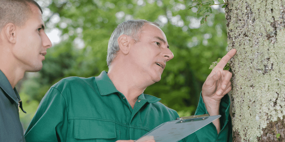 Preventative tree care is crucial to identifying potential issues.