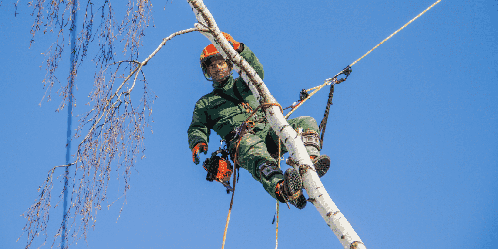 Utility arborist fall safety gear