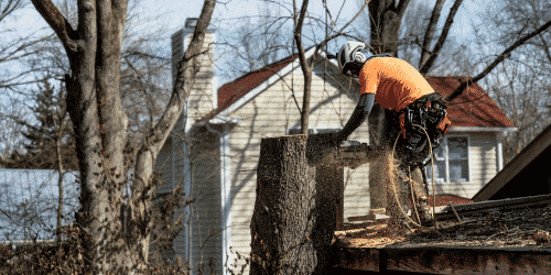 Tree surgeon on a roof cutting a tree