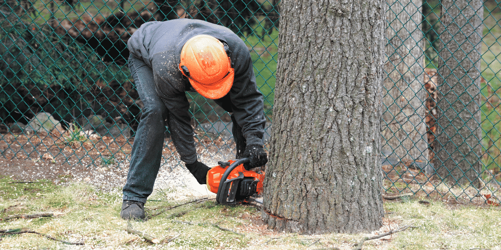 Tree care worker cuts down the wrong tree