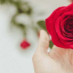 Greenhouse growers should capitalize on Valentine's Day