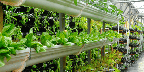 Vertical growing is increasing in popularity throughout the horticulture & floriculture industries