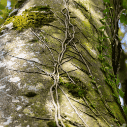 Vines growing on a tree