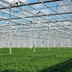 Horticulture & plant grower greenhouse growing facility