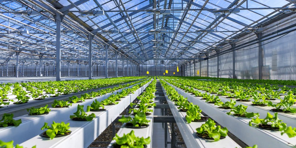 Clean hydroponic greenhouse