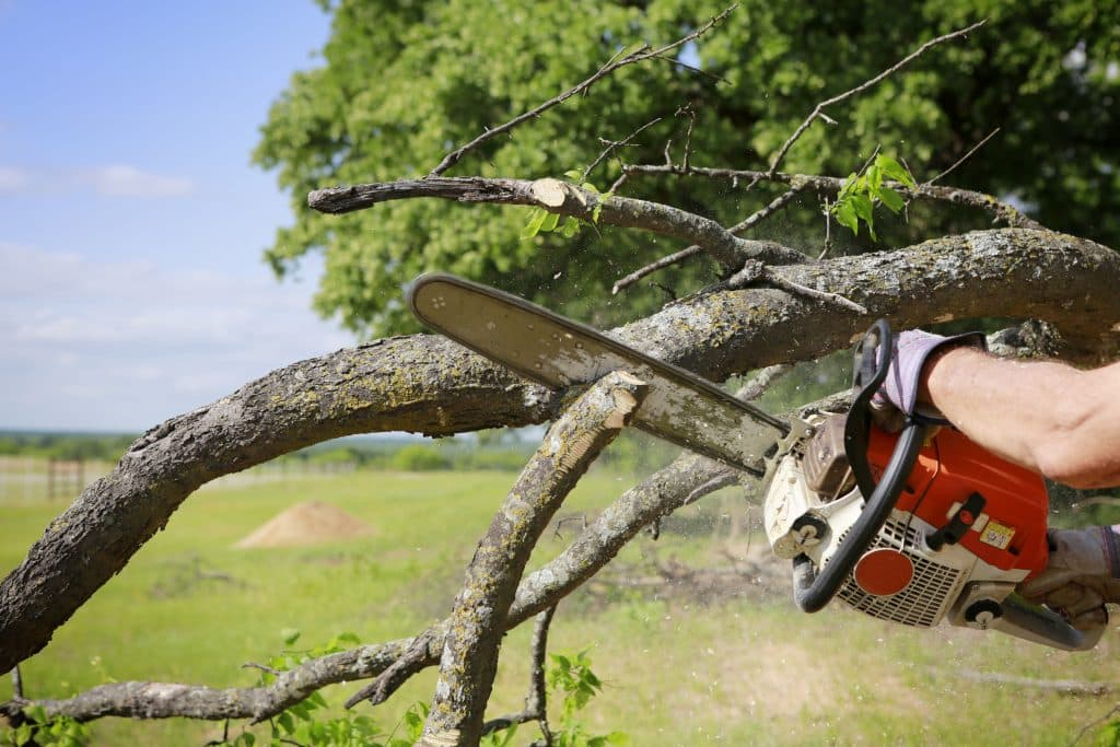 Tree service workers with excess liability coverage