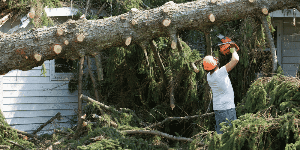 Tree care professional fallen tree