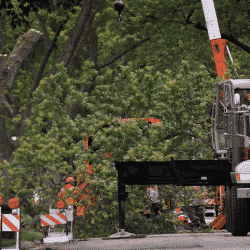 Work zone safety for tree service crew