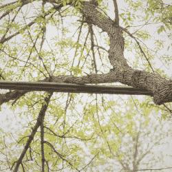 Tree limb electrical hazard on power line